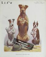 Life-Magazine-1919-07-31